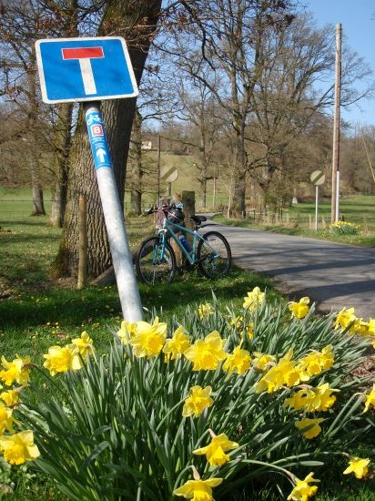 bike and daffodils