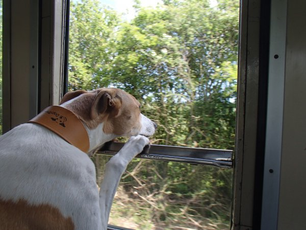 dog + train window