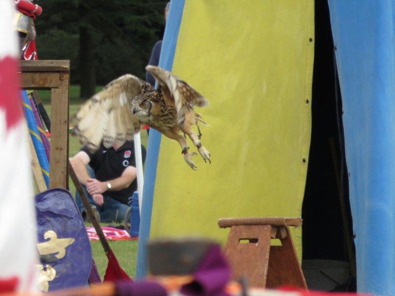 owl, in flight