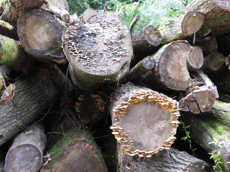 logs, with fungus