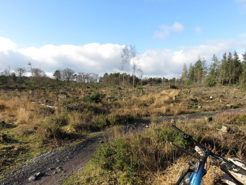 mountain bike trail at Haldon forest