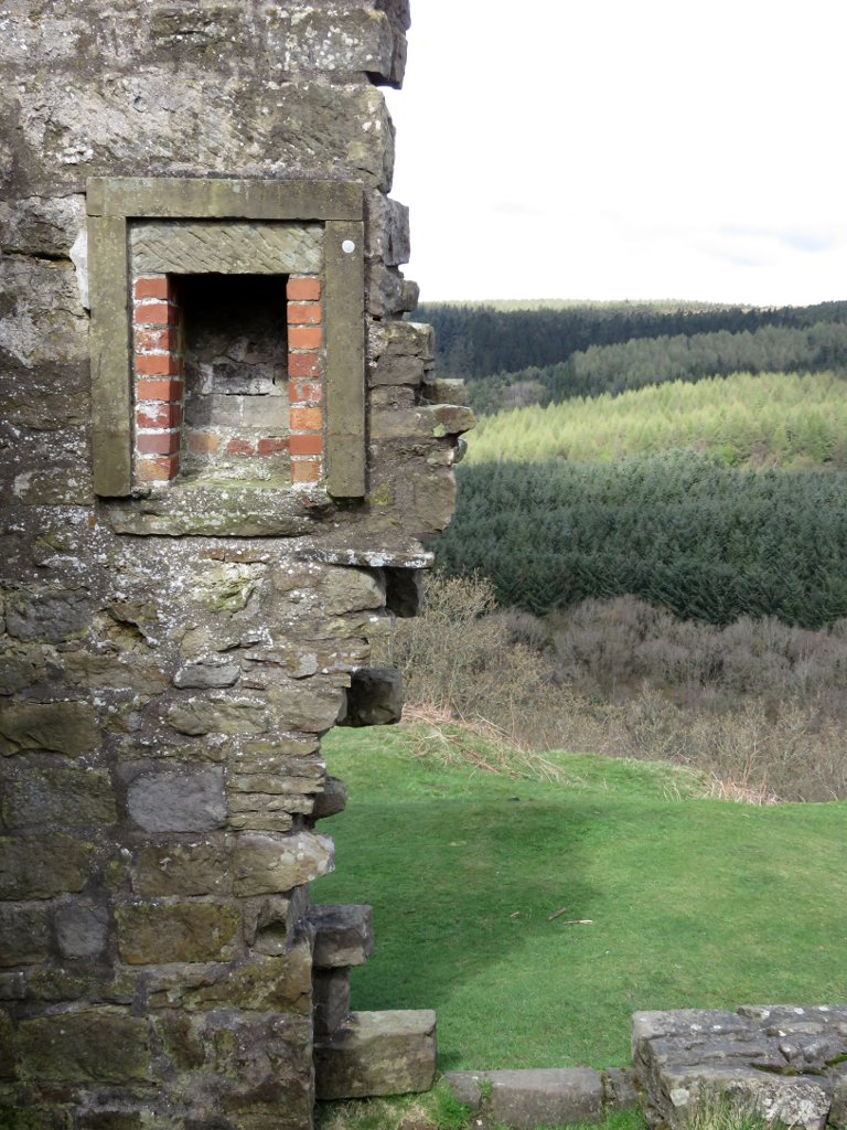 Skelton tower wall and trees