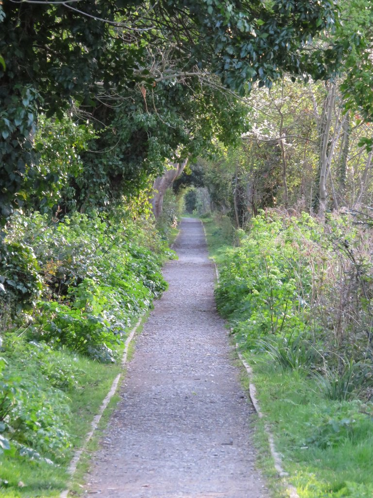 towpath tunnel of trees