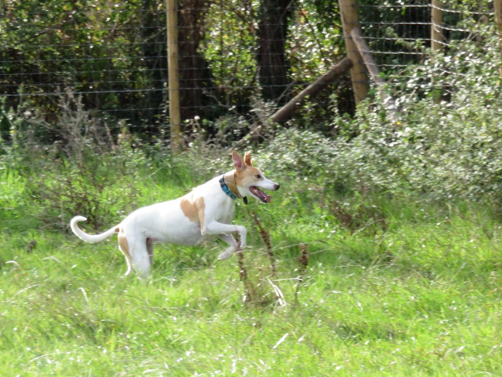 bonnie in the dog field