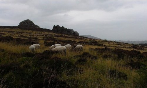 nipstone rock,  and some sheep